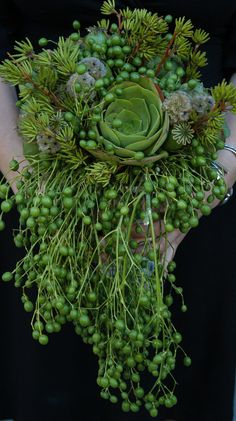 .Succulents - does anyone know the name of the round succulent? I don't think its Senecio Rowleyanus