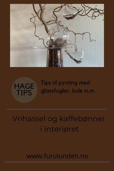 Hvorfor ikke pynte interiøret med Vrihassel og kaffebønner? Disse glassfuglene henger vanligvis på juletreet, men det betyr ikke at de ikke kan pryde en Vrihassel ellers i året. #vrihassel #interiørtips #kaffe #interiørinspirasjon #hageinspirasjon #trädgårdsinspiration #diy #gjørdetselv #kreativt #furulunden Gardening Tips