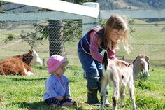 Gloucester, Barrington Tops, 3 hours north of Sydney Barrington Tops, Farm Cottage, Farm Stay, Gloucester, Coast, Animals, Animales, Animaux, Animal
