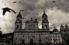 Pigeons in Bolivar Square, Bogota, #Colombia