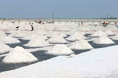 New Delhi: Irked by the rumours of salt shortage in different parts of Uttar Pradesh and in the national capital, the Consumer Affairs Department of the Centre tonight declared that there is no such. Salt, Indian, News, Outdoor, Outdoors, Salts, Outdoor Games, The Great Outdoors