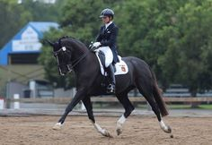 extended trotting Horses | 1351 best images about For the Love of Horses on Pinterest | Saddles, White horses and Ponies