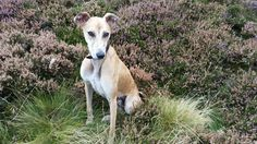 Mr Judd, coming to live with us very soon