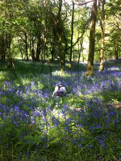 @Trudeestweets - Happiness is walking my dog this morning in the bluebell fields!