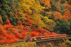 Sagano   Romantic Train Autumn Leaves