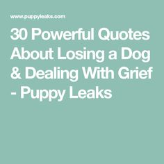 30 Powerful Quotes About Losing a Dog & Dealing With Grief - Puppy Leaks