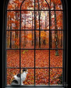 Autumn Cozy, Autumn Fall, Autumn Witch, Autumn Scenes, Autumn Aesthetic, Fall Is Here, Autumn Photography, Cat Photography, Best Seasons
