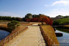 Beautiful Japanese garden: Korakuen in Okayama (November 2012)