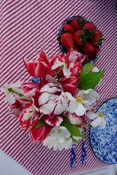 variegated  tulips.