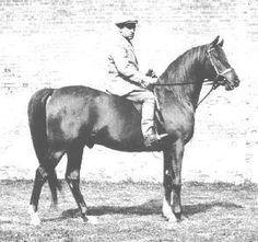 Serafix 1949 Arabian (Raktha x Serafina, Indian Gold)