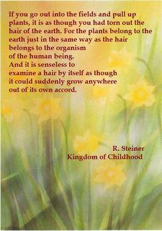 rudolf steiner - the human kingdom Abc School, Steiner Waldorf, Becoming Human, Rudolf Steiner, Waldorf Education, Nature Study, Beauty Quotes, Spiritual Inspiration, Botany