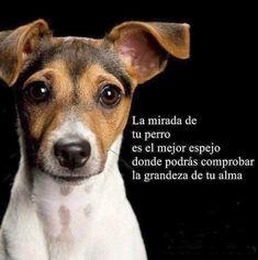 ... La mirada de tu perro es el mejor espejo donde podrás comprobar la grandeza de tu alma.