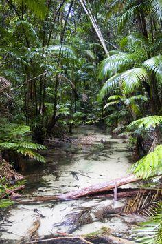 Sub-tropical Wanggoolba Creek #fraserisland #queensland #australia www.fraserisland.net