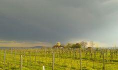 Gewitter zieht auf am Nussberg! Vineyard, Outdoor, Thunderstorms, Summer, Outdoors, Vine Yard, Vineyard Vines, Outdoor Games, The Great Outdoors