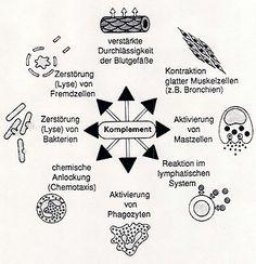 Physiologie: Angeborenes Immunsystem