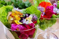 """日本人は""""花食人""""!?  花の美しい季節です。今年は花を食べましたか?「花を食べる」というと、特別なことのように感じますが、菜の花やあんパンについている桜の花の塩漬けなどの例を挙げれば、心当りがあるのではないでしょうか。刺身のツマや和えものなどに使われる食用菊のほか、蕗の薹(とう)、穂紫蘇、桜茶(桜湯)など、日本人は花をよく食べています。"""