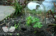 How To Make Your Own Garden Cloches To Protect Young Plants ...