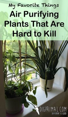 My Favorite Things: Air Purifying Plants That Are Hard to Kill - Houseplants Outdoor Plants, Air Plants, Garden Plants, Outdoor Gardens, Indoor Herbs, Real Plants, Plants Indoor, Container Gardening, Gardening Tips
