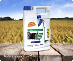 Pesticide formulations up to 1000 times more toxic than active ingredients tested for safety