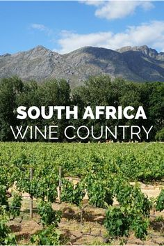 Why You Should Visit South Africa's Winelands.  Click the pin to read the post from www.flirtingwiththeglobe.com