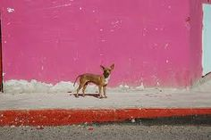 CHIHUAHUA IN MEXICO