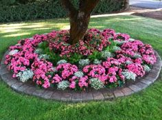 Xeriscape Front Yard Land scaping Ideas