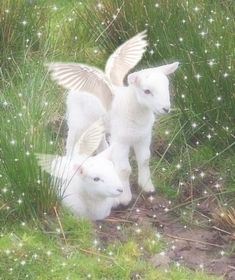 Angel Aesthetic, Nature Aesthetic, Aesthetic Vintage, Photo Wall Collage, Picture Wall, Baby Animals, Cute Animals, Anime Animals, Photowall Ideas