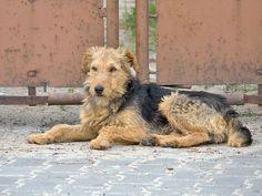 Lubisłowa: Jonaszowy pies. Pociecha2.blogspot.com