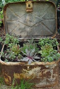 Old metal box garden filled with succulents. Cacti And Succulents, Planting Succulents, Yard Art, Garden Junk, Box Garden, Cactus Y Suculentas, My Secret Garden, Dream Garden, Container Gardening
