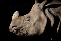 Please sign! Protect Threatened Rhinos From Illegal Poaching!