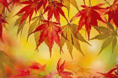 Autumn Curtain by Jacky Parker on 500px