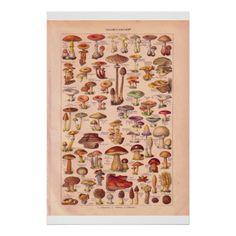 Vintage mushrooms poster 1920 Mushroom Kits, Personalized Posters, Custom Posters, Wall Collage, Design Your Own, Custom Framing, Vintage Shops, Stuffed Mushrooms, Create