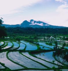 🐉 #ricefield #afterrain #foggy #mountains #landscape #landscapelovers #ontheroad #indonesia #bali