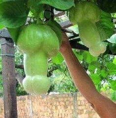 funny shape fruit