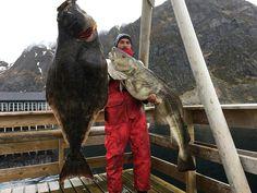 LOFOTEN FISHING - Angeln in den Lofoten