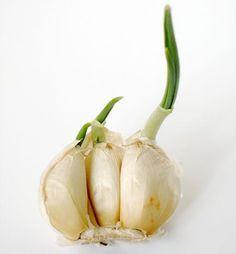 temperos e hortaliças possíveis de plantar em espaço pequeno   |   http://sossolteiros.bol.uol.com.br/15-alimentos-que-voce-compra-uma-vez-e-replanta-para-sempre/