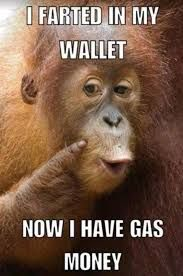 Monkey Memes Google Search Funny Monkey Memes Monkey Memes Funny Monkey Pictures