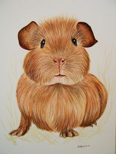 Guinea Pig Watercolour Painting | Flickr - Photo Sharing!