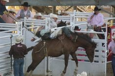 Rodeo!!