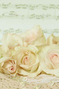 smooth vintage rose