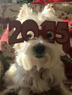 I'm ready! Happy New Year To All....    from a FB account       (Please Do Not Change This)