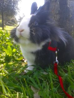 My little bunny. Sirius ♥