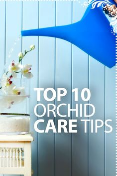 Top 10 Orchid Care Tips - http://www.ambius.com/blog/top-10-orchid-care-tips/