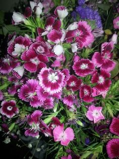 Geçmiş olsun çiçekleri :)