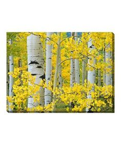 Aspen Trees Indoor/Outdoor Wrapped Canvas