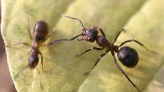 7 TIPOV, vďaka ktorým sa zbavíte mravcov - Pluska.sk