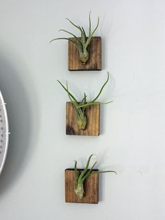 Wall Plant Decor unique air plant decor live air plants cork magnet house decor