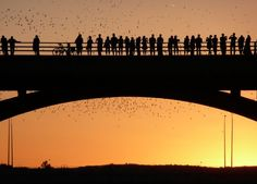 Mexican free-tailed bats emerge from their roosts under the Congress Avenue Bridge in Austin...beautiful...