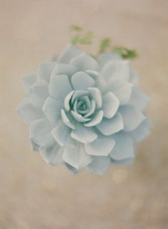 pale blue succulent from Style Me Pretty   Gallery