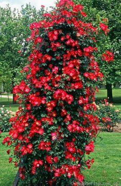 Die 50 Besten Bilder Von Rosengarten Roses Garden Gardens Und